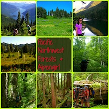 Trees of Washington at girls camp